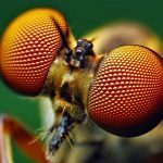 Insektenaugen inspirieren zu neuem Solarzellen-Design