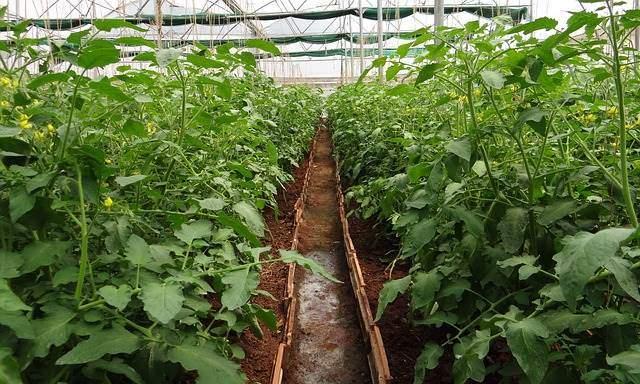 Ackerbau mit Meerwasser und Solarenergie