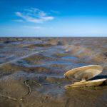 Diese Technologie entfernt CO2 aus dem Meer und stellt Muscheln her (3)